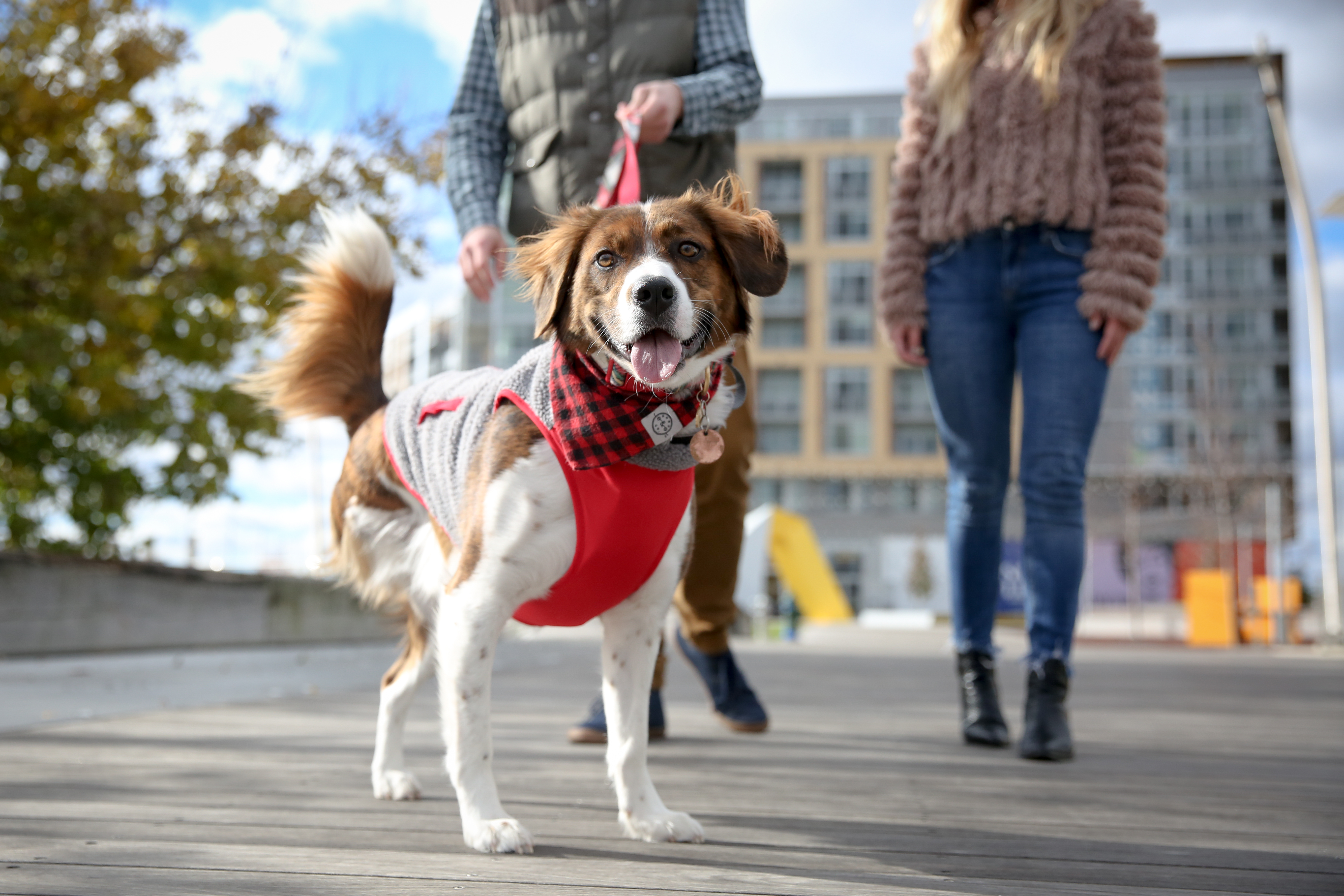 We're looking for dogs to feature in our weekly ruffined spotlight! Whether your pup is a mutt, purebred, skinny, chubby, young or old, we'd love to feature your dog.{&amp;nbsp;} In order to be considered, we ask that you and your dog live in D.C. or the surrounding area and your dog can sit and stay.{&amp;nbsp;}Drop us an email at aandrade@dcrefined.com with you and your dog's name and location. Please tell us a bit about your dog too!{&amp;nbsp;}<br>