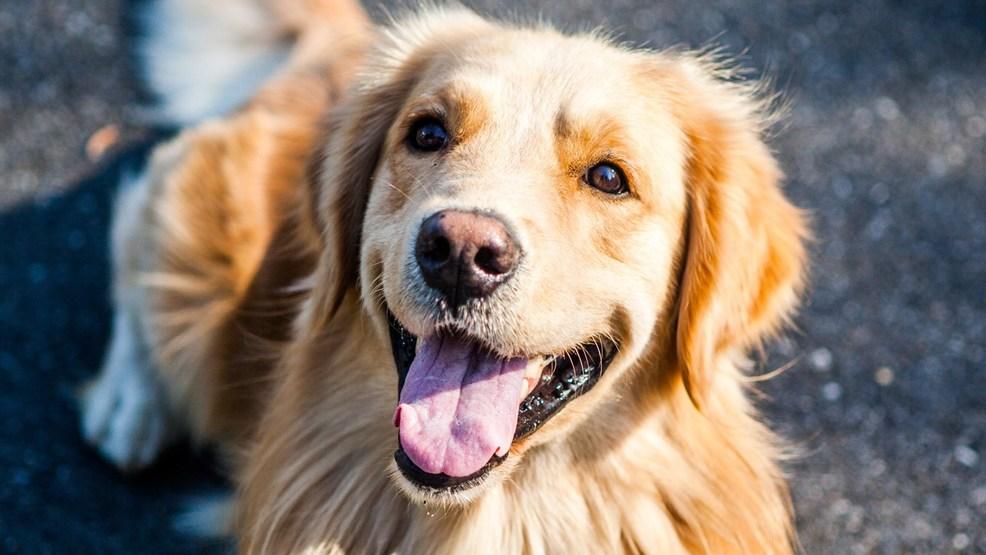 How To Treat Choking Dog