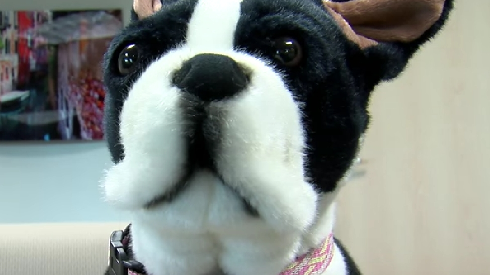 Emotional Support Animal System So Broken We Registered A Stuffed
