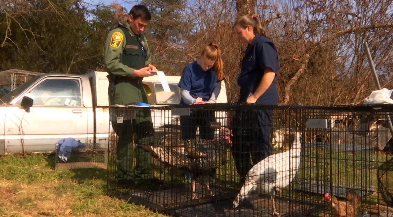 Goats, horses, emus, sheep, rabbits, turkeys, peacocks, ducks, an cats are just some of the animals that were rescued (Photo: WRIC)