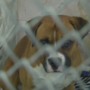 Animal shelter filled with pets fleeing fireworks Thursday morning