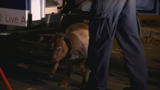 Police identify woman mauled to death by pit bull inside D.C. home