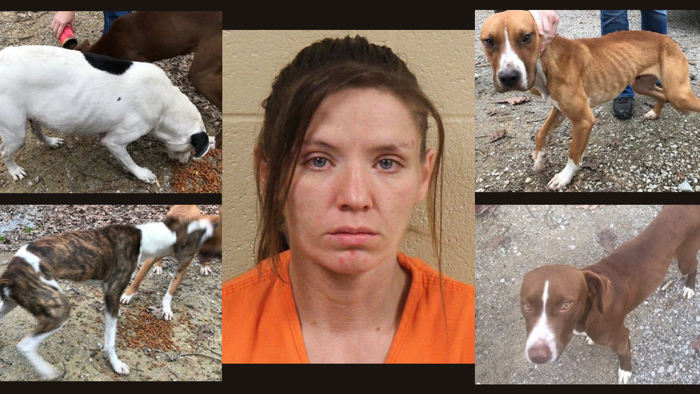 Grundy County Woman Charged With Animal Cruelty After Dogs