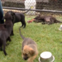 8 rescued puppies take 'freedom ride' from Texas to Wintersville