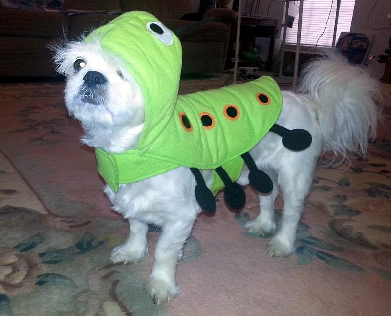 He's not happy at all with his costume!