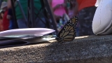 Butterfly release at Leila Arboretum honors family and raises money for hospice