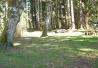 HB Van Duzer Forest State Scenic Corridor picnic area- Oregon State Parks photo.jpg
