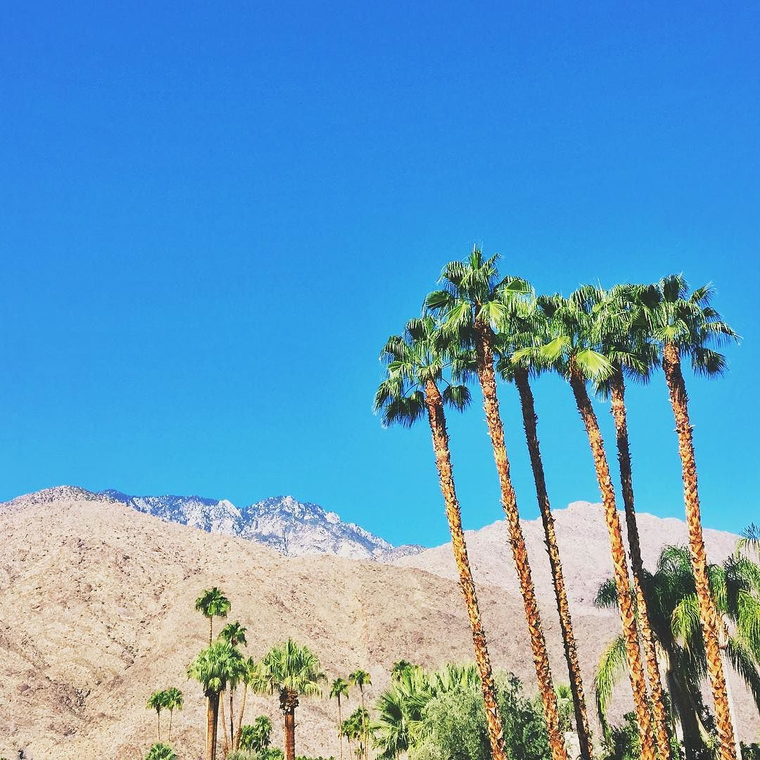 Blue skies and green palm trees in Palm Springs