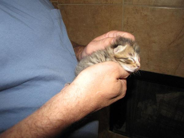 Mercury was approximately 4 days old when he was found near tall grass.