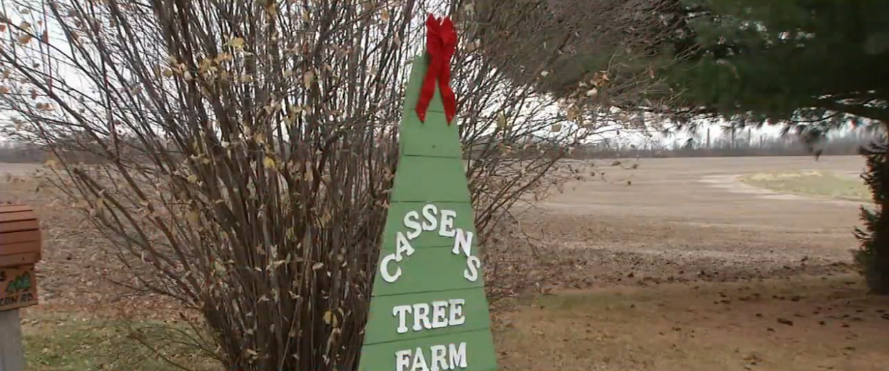 If you haven't bought a Christmas tree yet, it may be a good idea. (WRSP)
