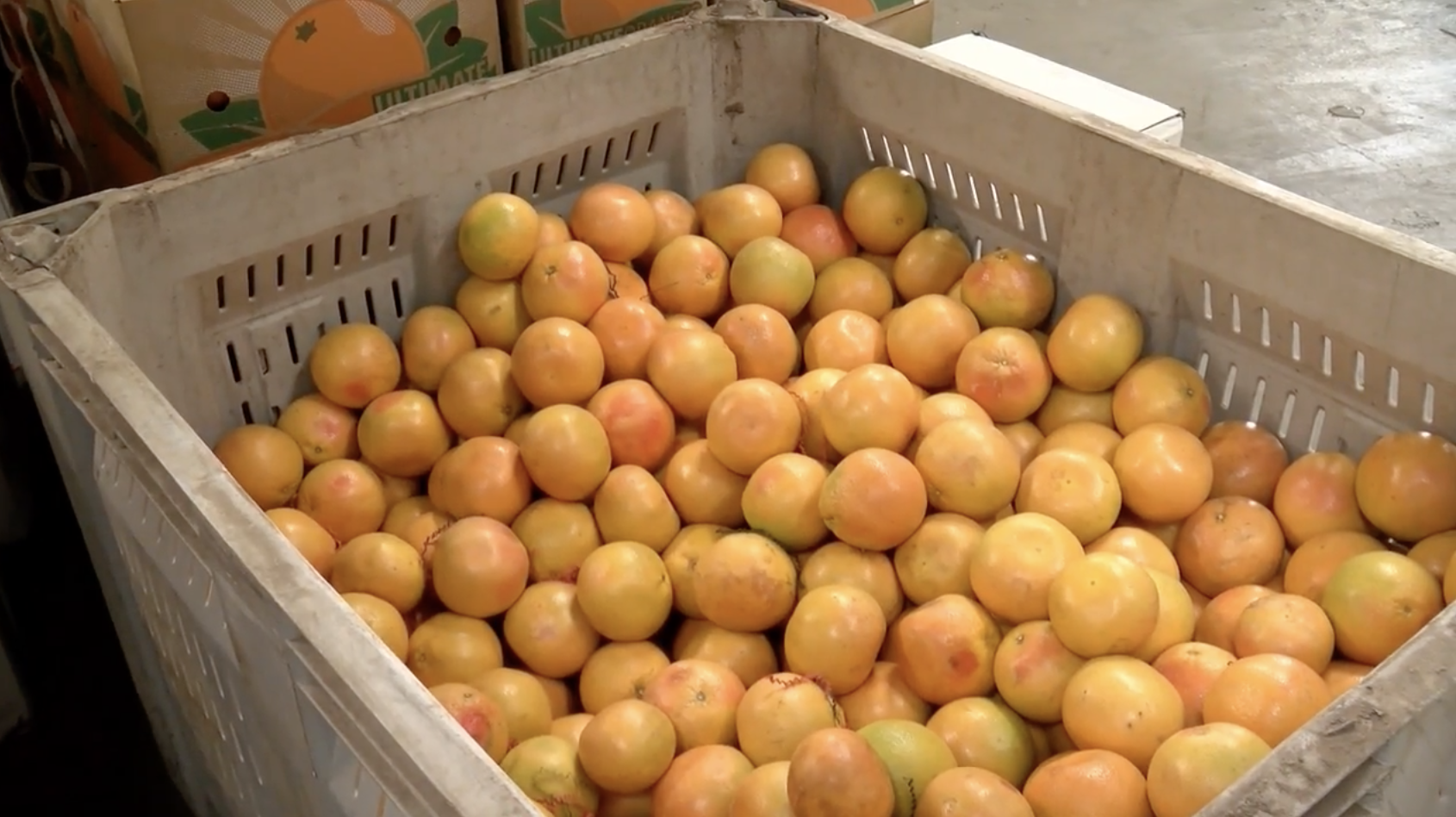 A Harlingen company will ship more than 600,000 boxes of Rio Grande Valley fruit and nuts during December.