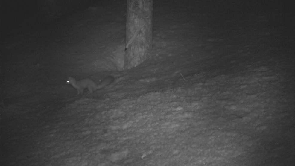 Rare animal sighting in mountains near Moab