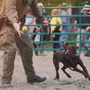 Washoe County Sheriff's Office new K9 dog 'Boomer' meets public on Saturday