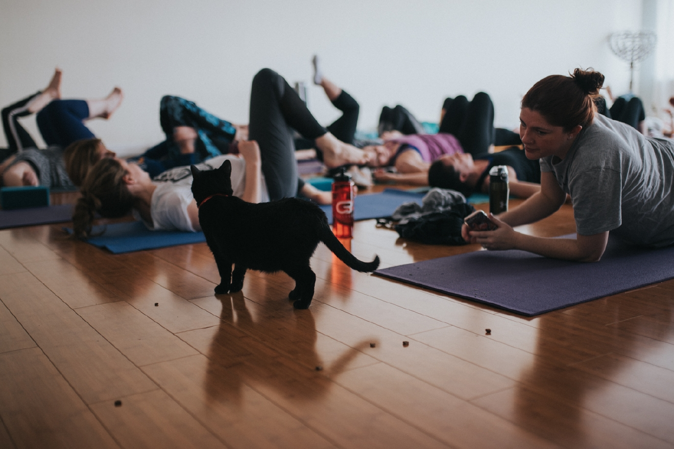 Yoga With Cats was held on Saturday, March 11 at Elemental Om in Montgomery. Several adoptable cats (from the Ohio Alleycat Resource & Spay/Neuter Clinic) were in the room as attendees practiced yoga. The class was led by Trisha Durham, and ticket sales benefitted OAR. / Image: Brianna Long // Published: 3.16.17