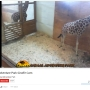 Giraffe live stream returns after YouTube removes it over 'nudity and sexual content'