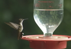 HUMMINGBIRDS IN JAC. CO.transfer_frame_1417.jpg