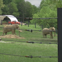 Berlin students install hay feeders for elephants in Somerset County