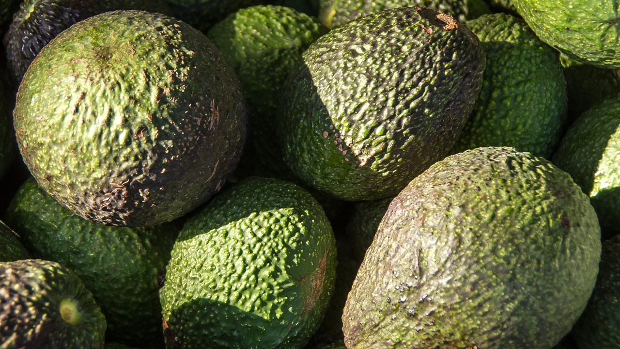 People are hurting themselves because they don't know how to properly cut avocados. (MGN Online)