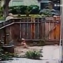 Caught on camera: Man leans over fence and hits dog with pole