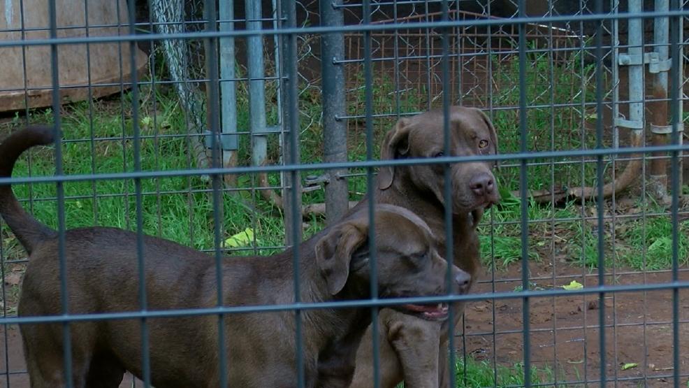 Camada pasar 434 días en Bixby refugio de animales - KTUL 1
