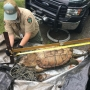 Rare alligator snapper found at Center Hill Lake