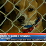 Reducing euthanasia numbers at Palm Valley Animal Center