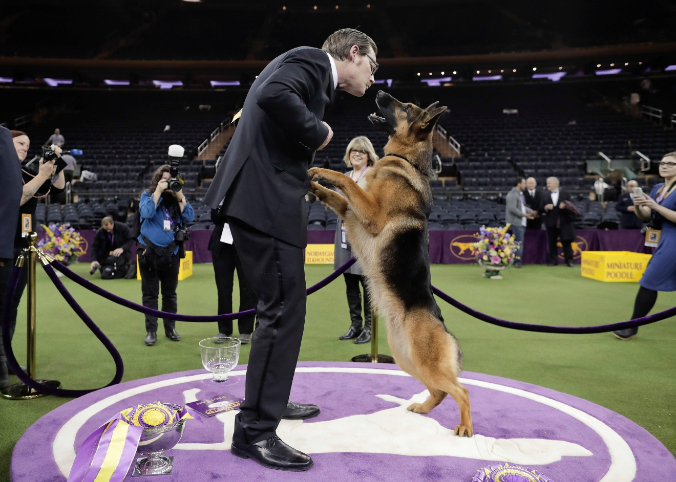 Rumor, a German shepherd, leaps to lick her handler and co-owner Kent Boyles on the face after winning Best in Show at the 141st Westminster Kennel Club Dog Show, early Wednesday, Feb. 15, 2017, in New York. (AP Photo/Julie Jacobson)