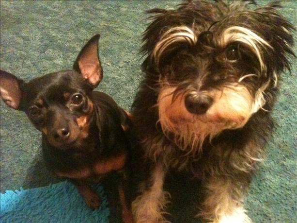 <a  href=&quot;http://share.valleycentral.com/Media/View/3244712&quot;>Pookie &amp; Indy</a>