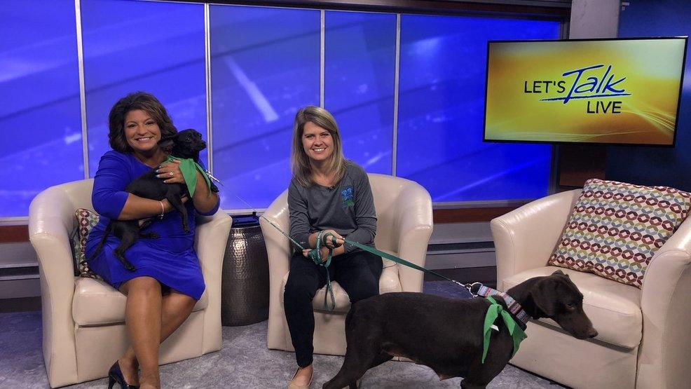 Lucky dog animal rescue | WJLA