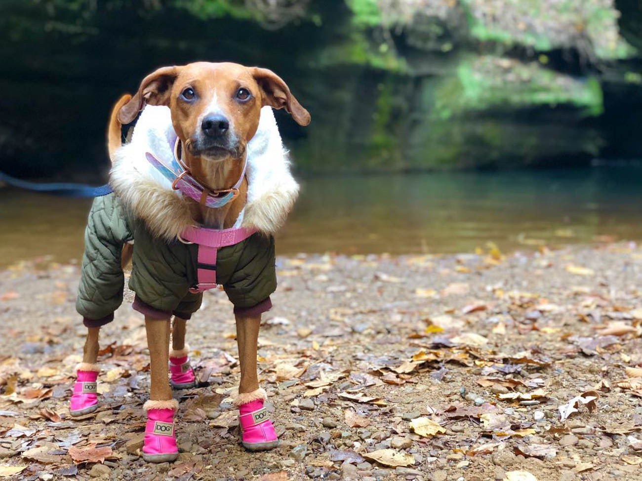 Bella is a Coonhound Mutt who loves to twerk and strut around Downtown in all of her outfits. Bella's mom, Maria K. Della Ripa, loves doggos so much, she's a professional dog sitter. / Image courtesy of Instagram user @bella_inthecity  // Published: 11.28.18