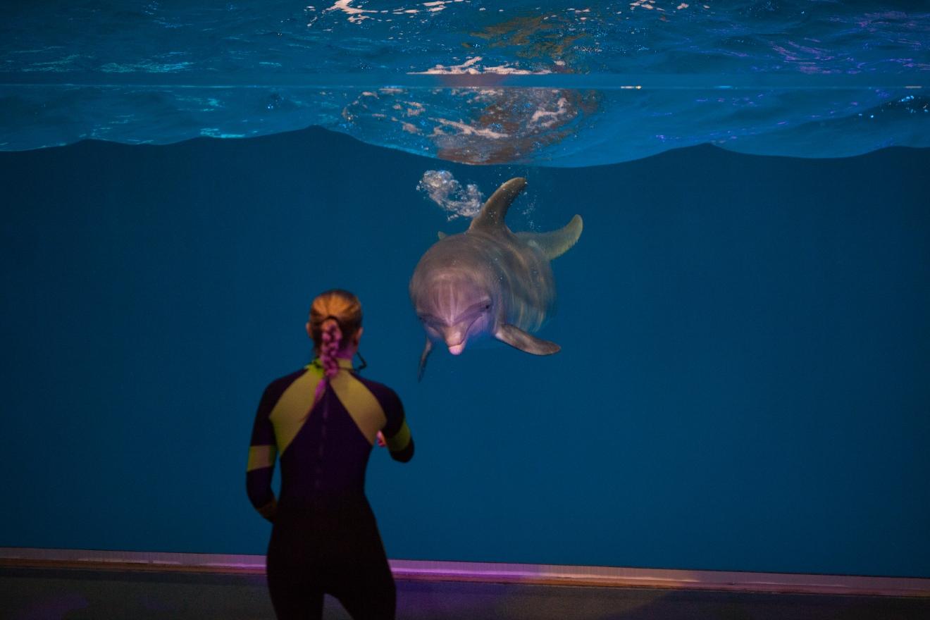 New Dolphin Presentation at the Georgia Aquarium   WTVC