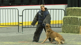 GALLERY | LVMPD Police K-9 Trials held at Orleans Arena