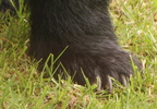 SPRINGTIME BEAR INCIDENTS_0002_frame_61459.jpg