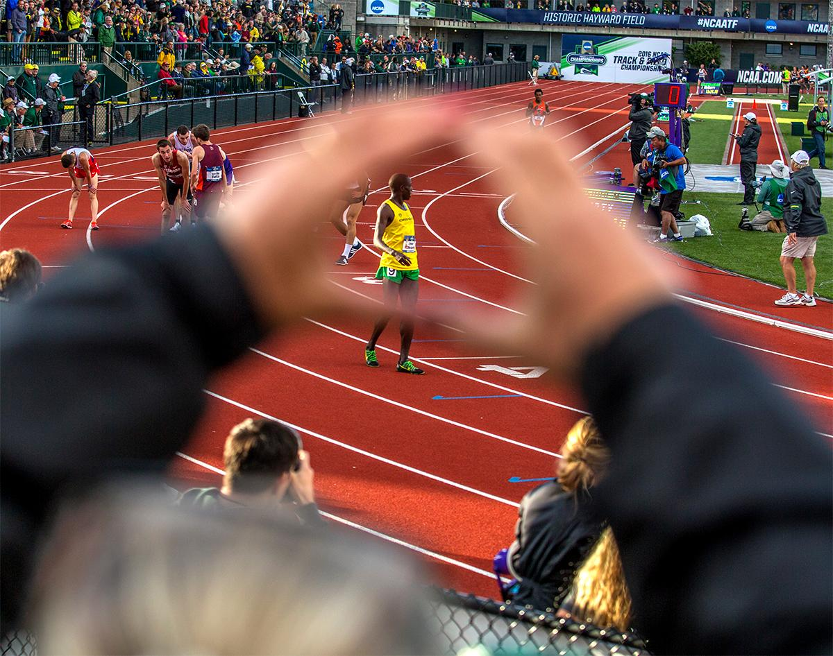 UO Duck's Edward Cheserek is framed through the hands of a fan forming the Oregon 'O.' Cheserek won the race in 13:25.59. Photo by August Frank, Oregon News Lab