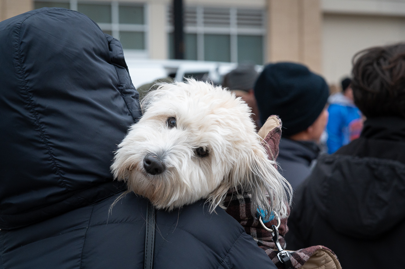 Dogs were out in force to woof their support for the racers. / Image: Phil Armstrong, Cincinnati Refined // Published: 11.28.19