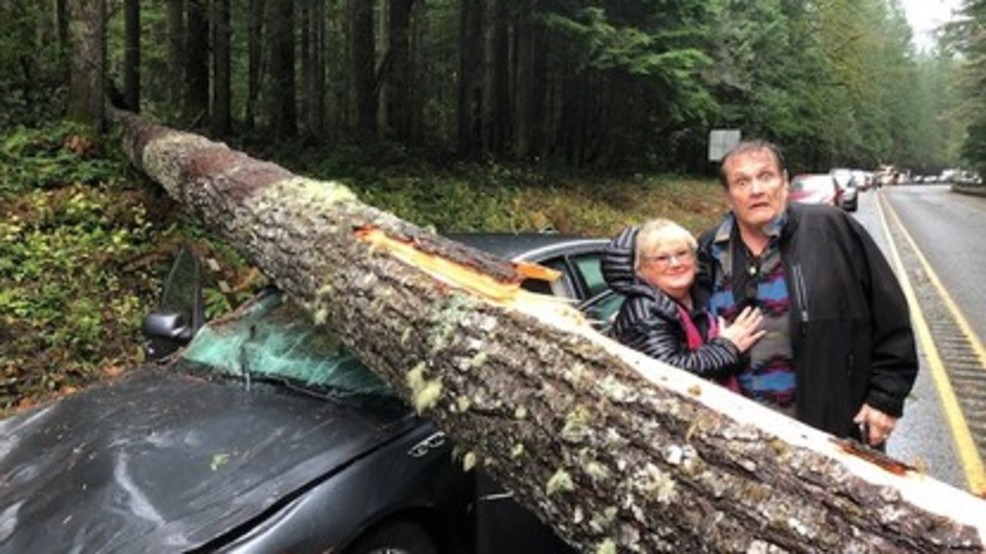 """By grace of God"" WA couple uninjured as tree smashes car"
