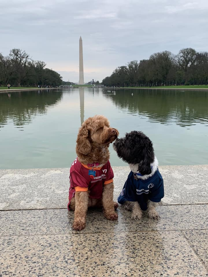 """ Lincoln (right) loves his best friend Coco. They're inseparable when they get together!! They have the best time together hanging out in D.C. and their favorite play date in D.C. was by the Lincoln!"" (Image: Courtesy{ } Colleen Cwenar Csech)"
