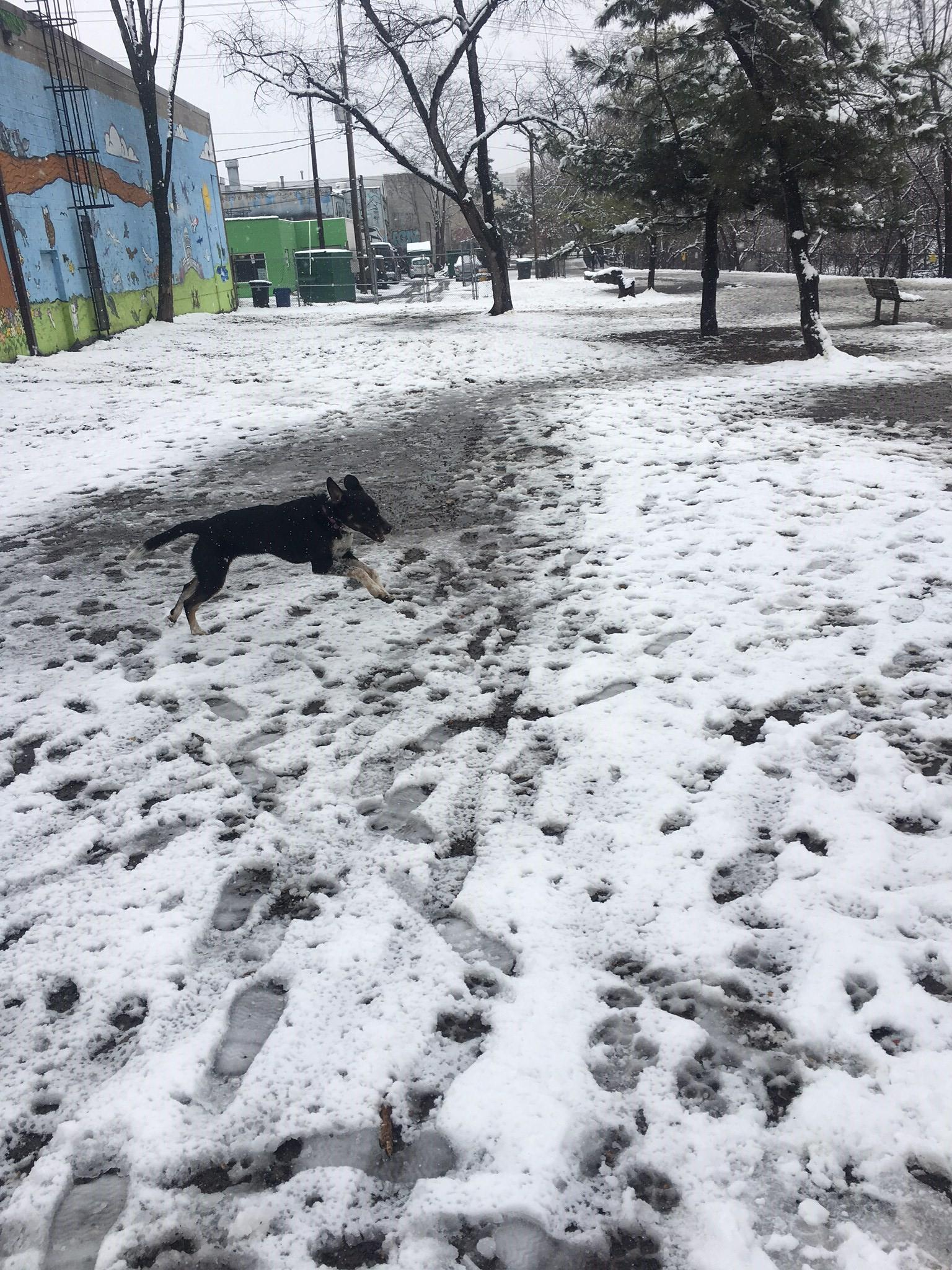 D.C. finally got its first real snowfall of the season -- on March 21! Given that it's the probably the only flakes we'll see for a while, the pups of the DMV decided to really live it up. Check out a few of the adorable pets we spotted chilling in the snow today!  (Image: Courtesy Clare O'Doherty)