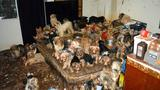 California couple pleads guilty to hoarding 170 Yorkies
