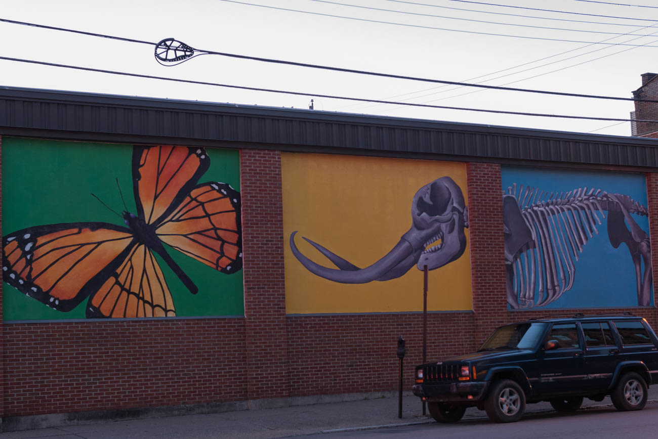 MURAL: Kentucky Natural History / ARTIST: ArtWorks / LOCATION: 24 E. 5th Street (41011) / Image: Mike Menke // Published: 3.22.18