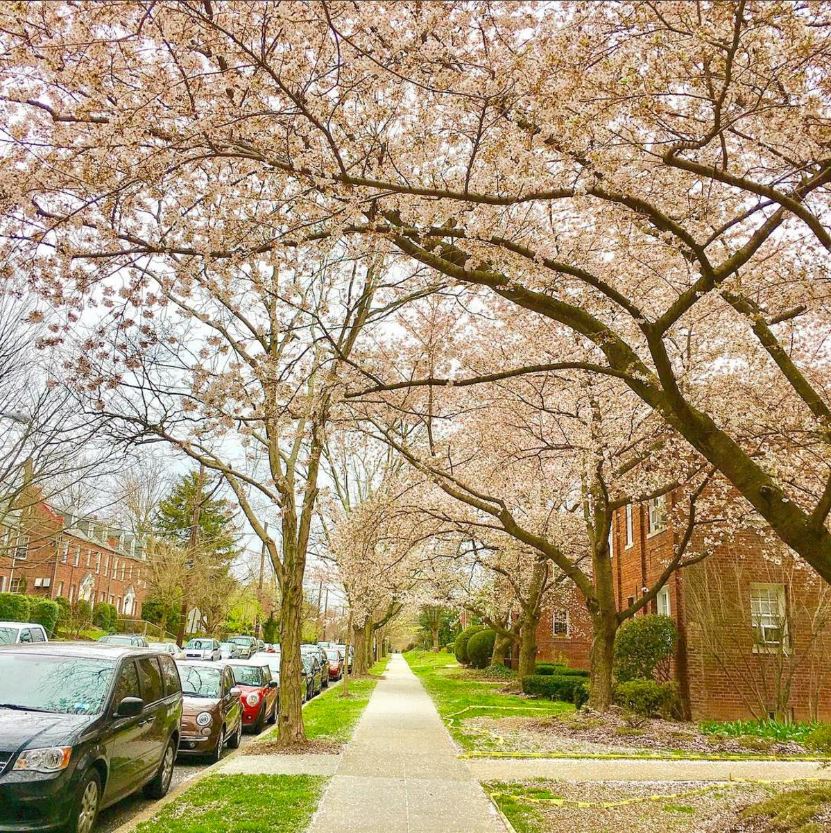 Glover Park is just uphill from Georgetown, but this neighborhood is a hidden gem and the locals can't get enough of its quiet forests and picturesque homes. Here are some of our favorite Instagram pics from one of the cutest 'hoods in D.C. (David Rose/@david__rose)