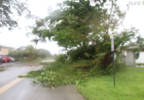 Deerfield Beach_Downed Tree.PNG