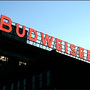 Cheers: Busch brewery in Williamsburg reopens to tourists