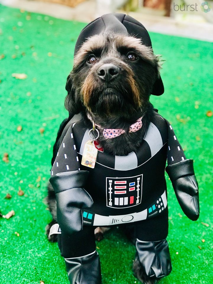 A lil Darth Vader! (Image: Courtesy Lynette Kizito)