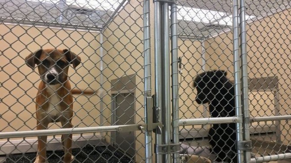 State says Macon-Bibb Animal Welfare can't accept any more animals due to overcrowding