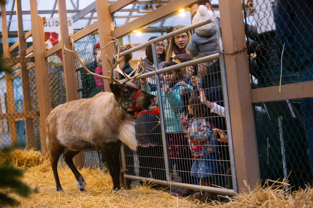 Swanson's Nursery has definitely become a Holiday tradition for families as they transform into a holiday village. Their holiday pavilion, filled with beautiful holiday décor, unique ornaments, stocking stuffers and gifts for everyone. Dasher and Blitzen the reindeer, model trains, photos with Santa and more highlight Swanson's Nursery during the holidays. (Image: Joshua Lewis / Seattle Refined)