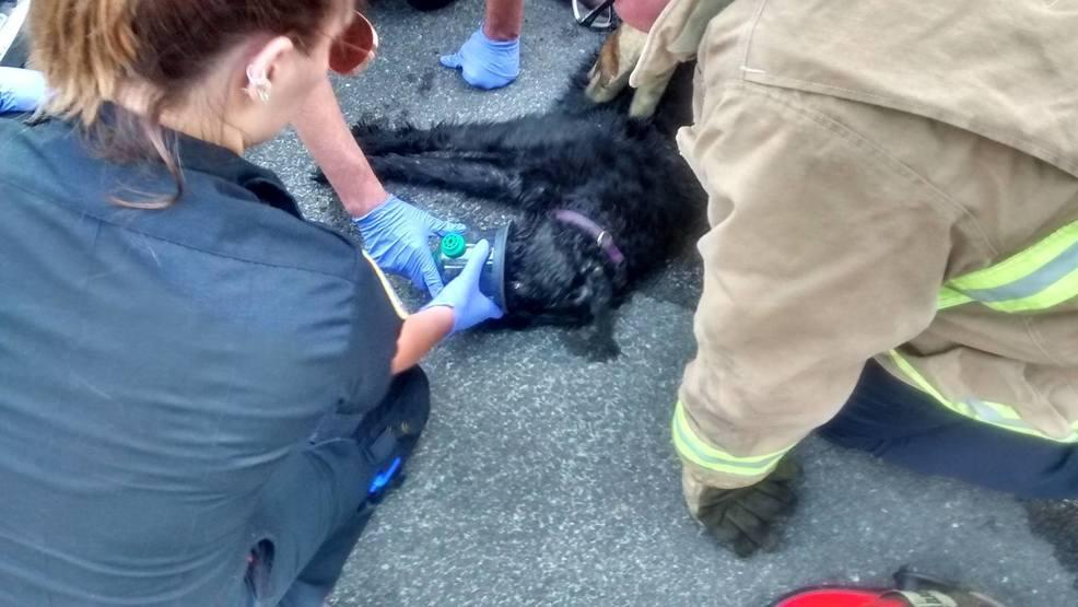 Dog Rescue Grants Pass