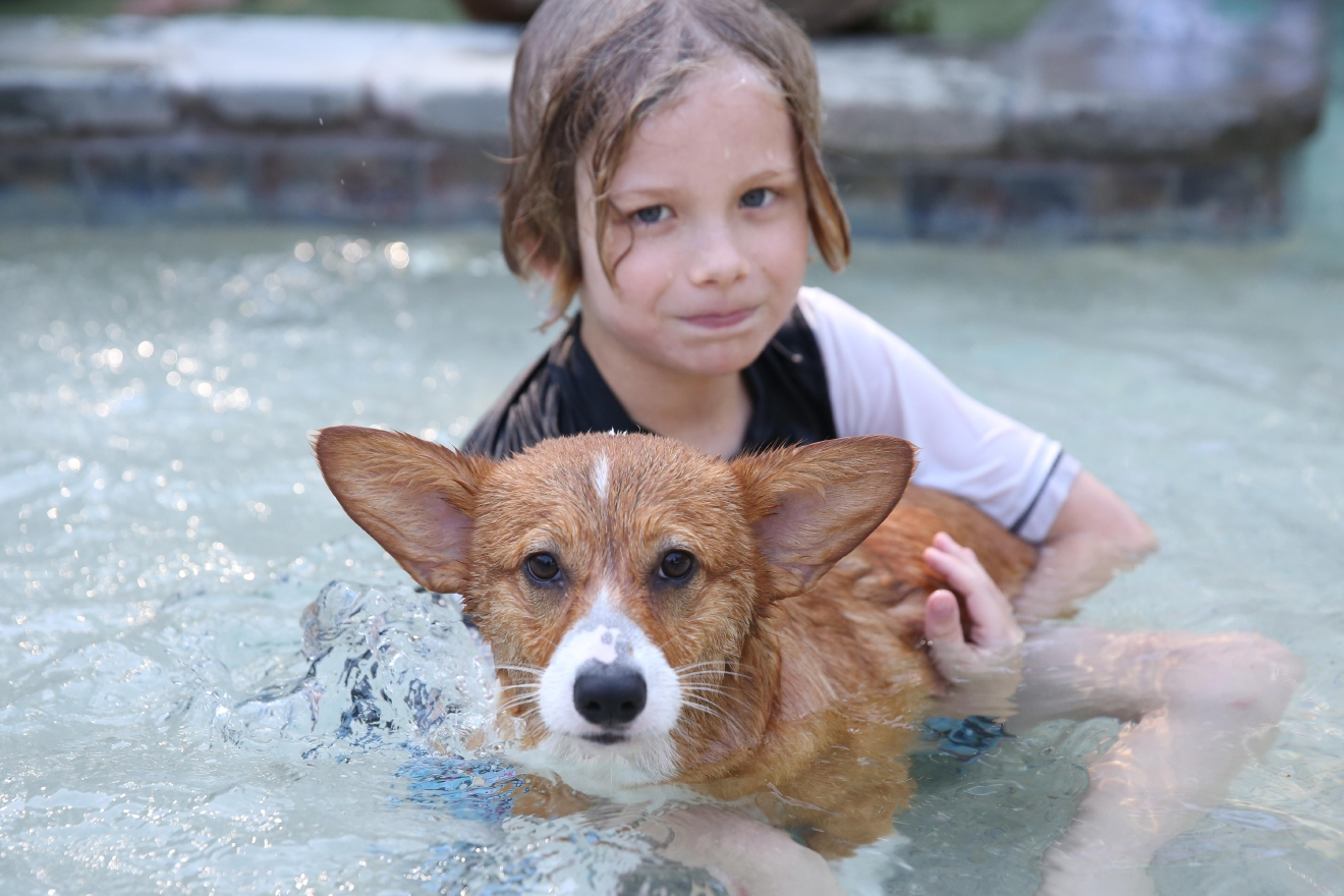 This weekend the Annapolis Corgi Club and friends took over a pet resort pool to beat the heat. Although some of the chubbier corgis couldn't doggie paddle with their adorably stumpy legs, they were able to enjoy the water with help from life jackets. (Amanda Andrade-Rhoades/DC Refined)