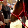 Clydesdales help raise money for Salvation Army