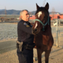 WATCH: Talent Police corral horse in dog park